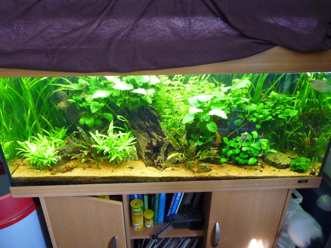 Ma petit histoire Aquariophile de 2009 à aujourd'hui  P1060161