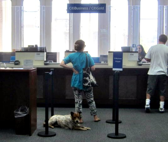 no one likes to wait for a bank teller not even a dog the eastsider la