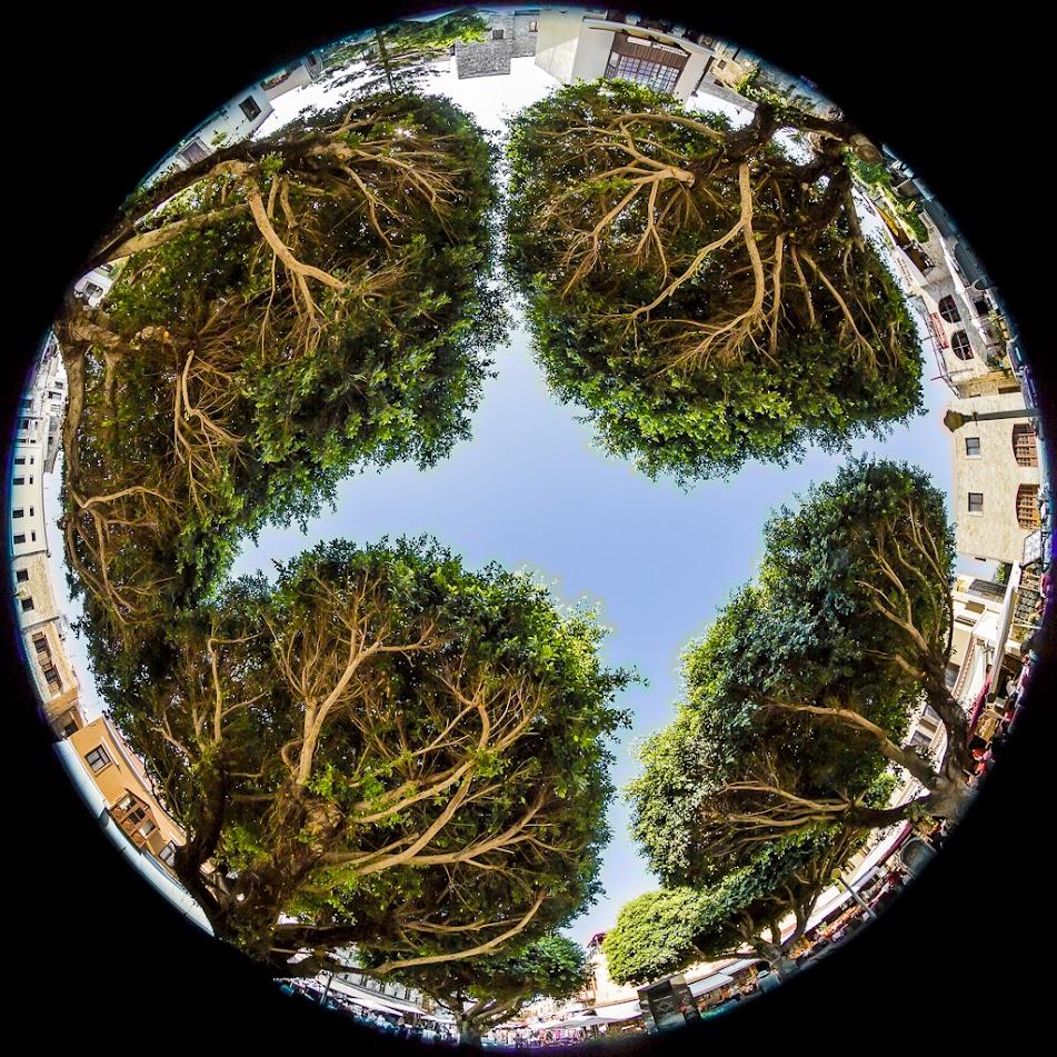 IMAGE: https://lh4.googleusercontent.com/-k4AvV7zOCe0/UyeJ15KcSsI/AAAAAAAAs9c/J_oM_fn-Ums/s951-no/Turkish+Trees.JPG