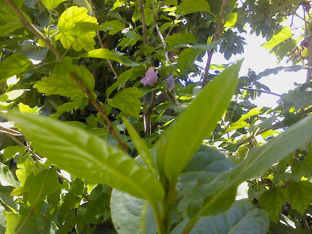 Para los que les gustan las plantas mi jardin taringa for Plantas para mi jardin