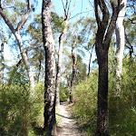 Walking along the ridge north of Banggarai Creek (352775)
