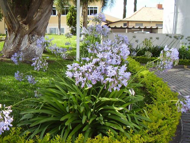 Para montagem de canteiros floridos, podemos utilizar plantas