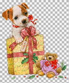 @Greg_Giordano_Dog_Gift_Teddy.jpg