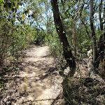 Taller vegetation on the Geebung Track (250168)