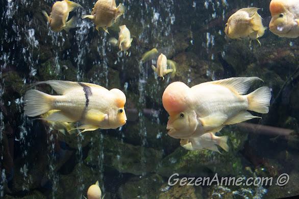 Darıca Hayvanat Bahçesi'nde, akvaryumdaki balıklardan
