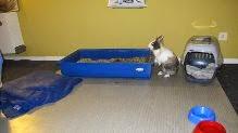 Gaufrette, lapine tricolore-[adoptée] Gaufrette7-67979