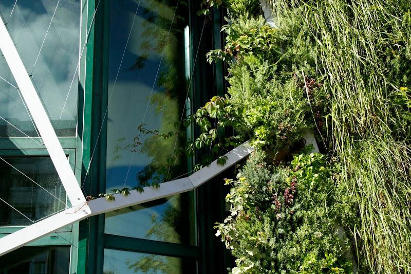 Trepadoras jardín vertical