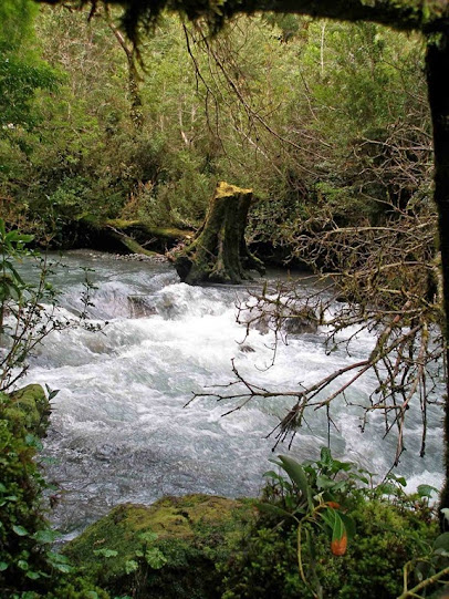 Bosque encantado, el Queulat