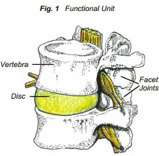 Functional Unit of Lower Back