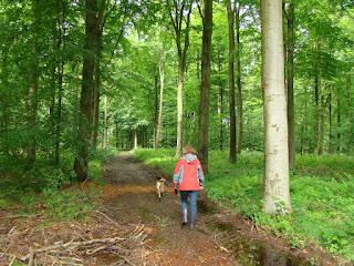 Vargaarde Skov, Hejlsminde, 6094 Hejls  ©ole.futtrup@live.dk