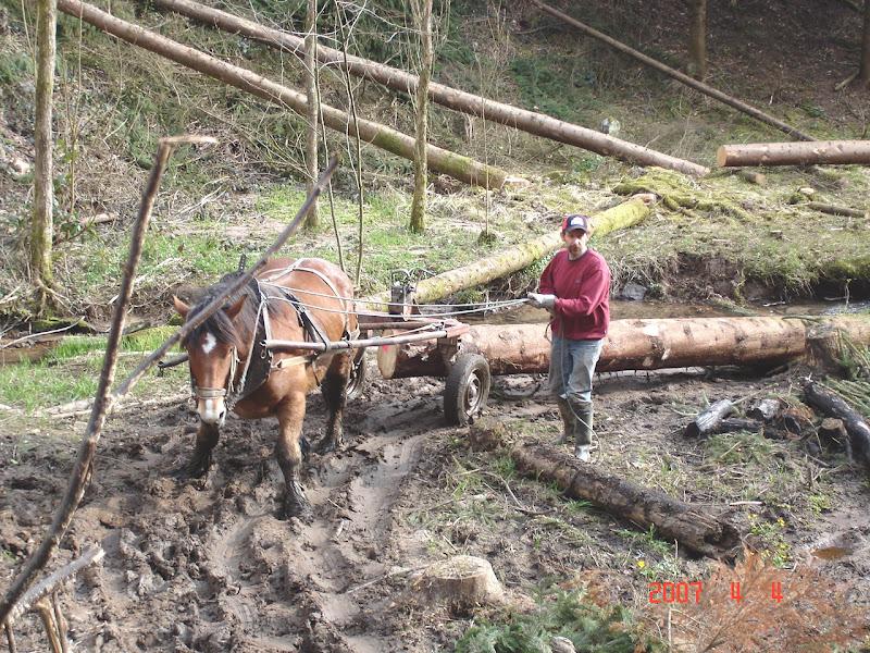 Thème de Janvier : le cheval au travail - Page 3 DSC01427