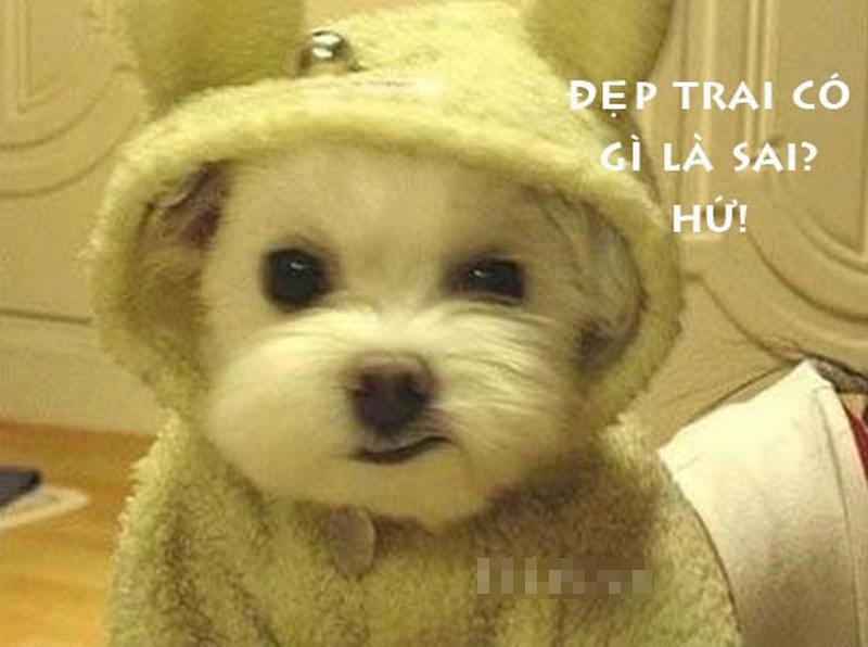 Ảnh chế Chó-Cún hài hước, vui nhộn nhất