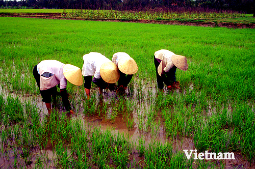 Throughout Vietnam - Thumbnail
