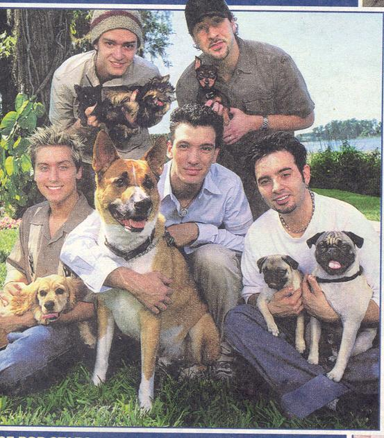 Nsync and dogs