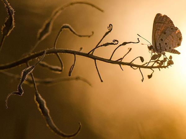 Бабочка на закате