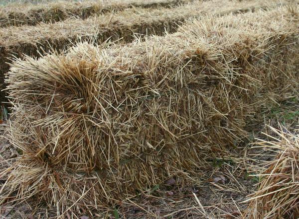 how to make alfalfa meal