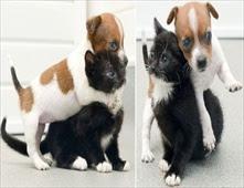 كلبة وهرة شقيقتان