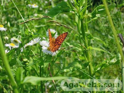 A butterfly: Cheile Carasului - Prolaz