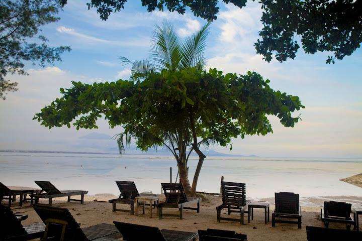 Шта друго него дрво на плажи