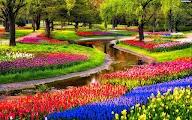 Цветочный парк Keukenhof