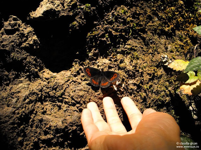 fluture pe stanca