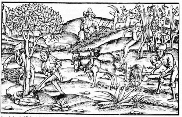 Landwirtschaftliche Arbeiten im 14. Jahrhundert