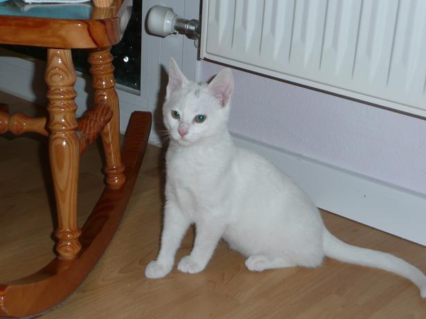 Zuri, cachorrita blanca requeteguapa busca papas.Alava. ¡ADOPTADA! Fotos%2B009