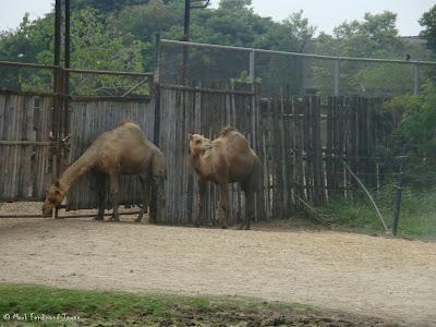 Safari World - Safari Park Bangkok Photo 6