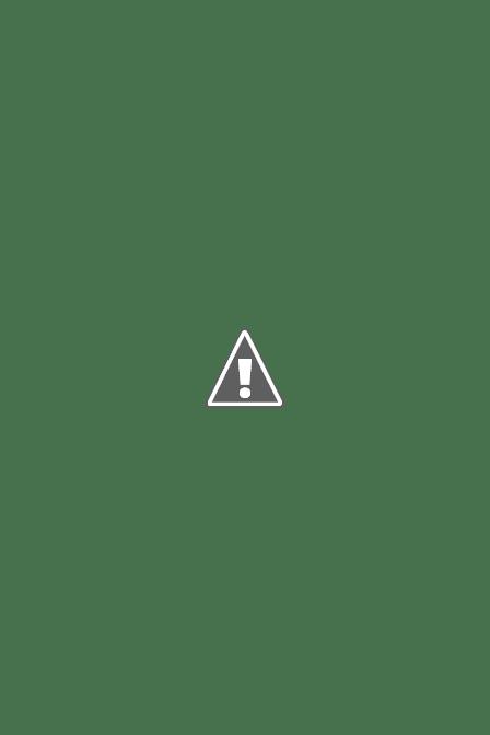 Le jardin en mai... IMG_6310