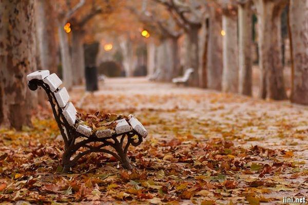 ảnh ghế đá mùa thu
