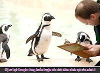 googlepenguin Đưa web thăng hạng trở lại ngay hôm nay!