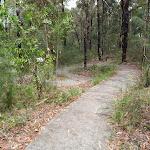 Mambara Track winding through the trees (82882)