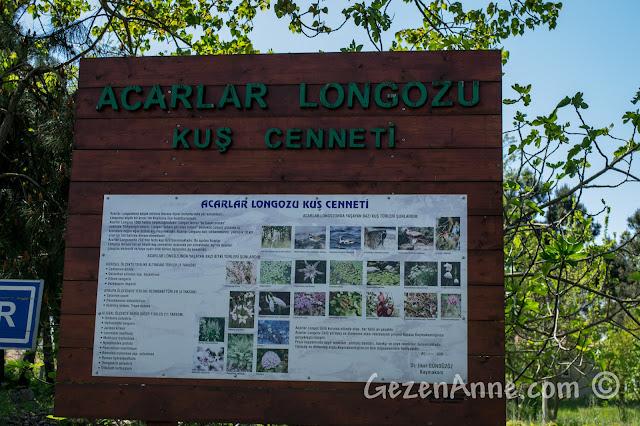 Sakarya, Karasu'daki Acarlar Longozu