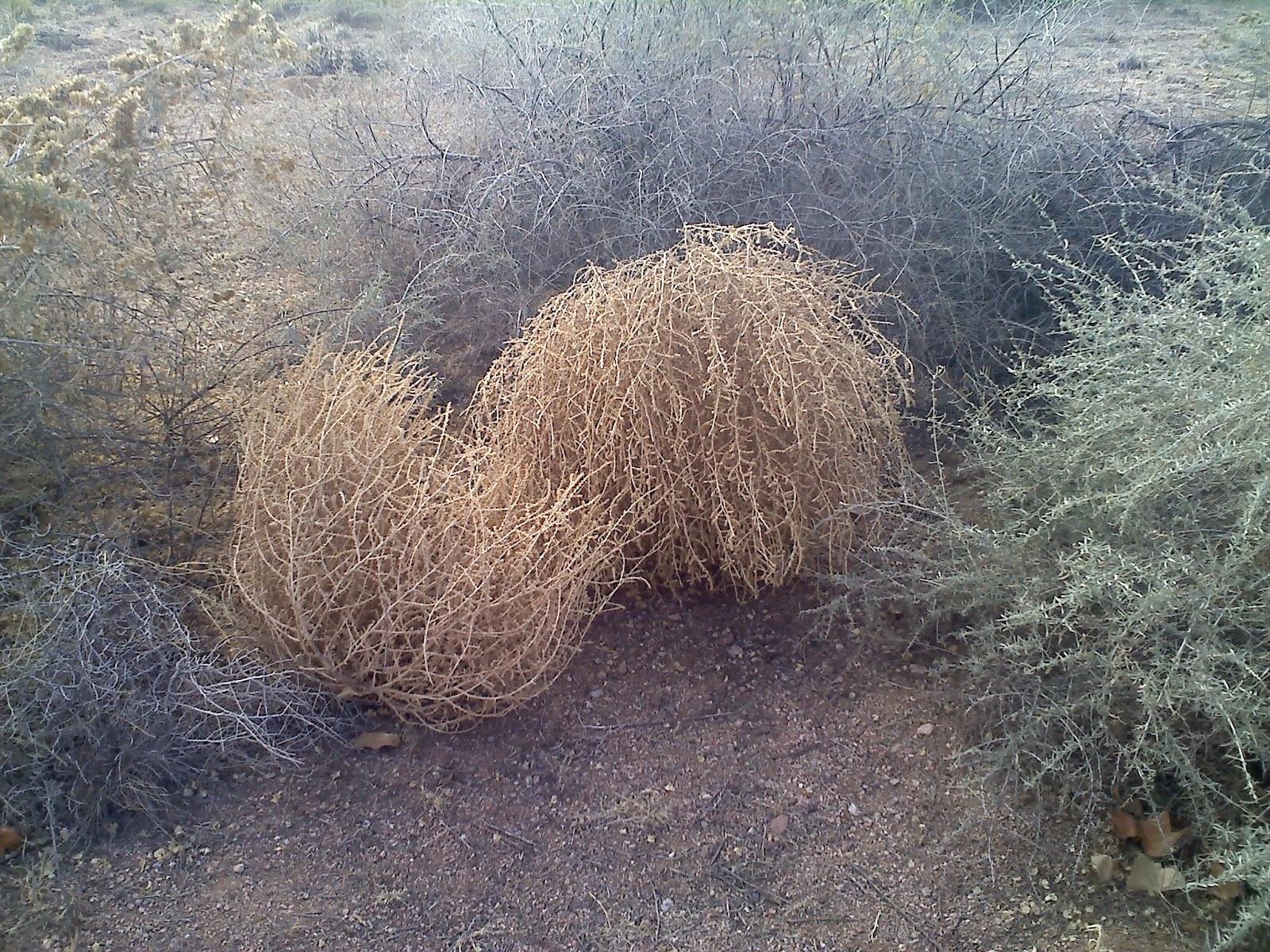 Tumbleweed Rolls Into Battle!