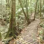 Timber path on Waterman Walk (226438)