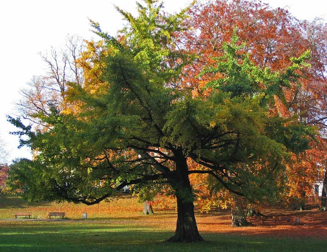 l arbre aux mille ecus ou quarante cus gn s. Black Bedroom Furniture Sets. Home Design Ideas