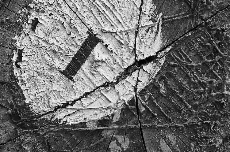 Manca branca com a letra I inscrita nela, quase no centro do tronco
