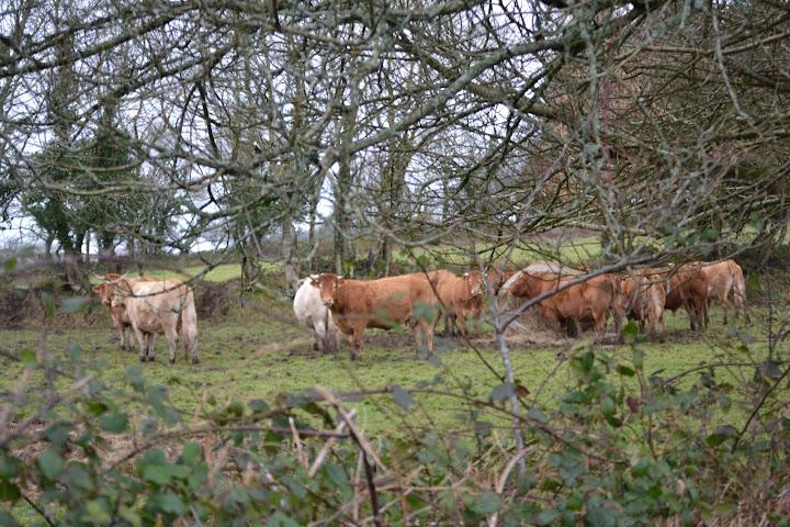 le troupeau du village