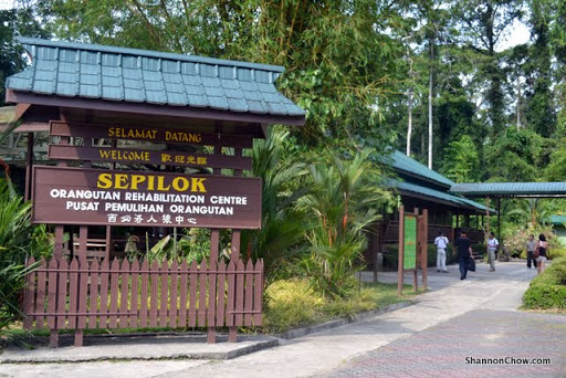 Sepilok Orang Utan Rehabilitation Center
