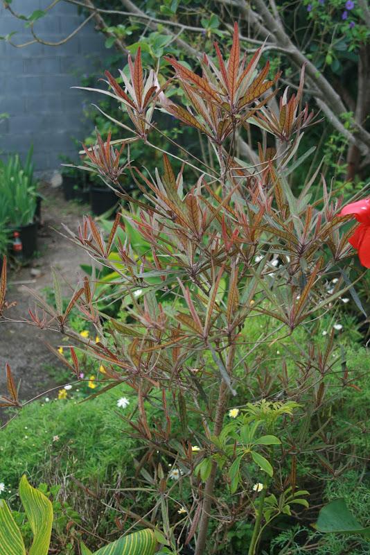 Futur jardin d'orchidées!!! IMG_3537