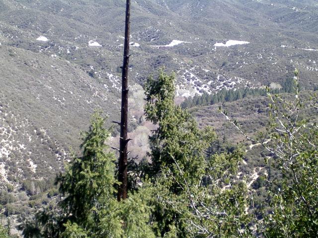 nude trees in the basin of Big Tujunga Creek
