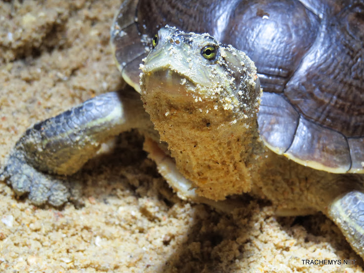 mes tortues (BK) - Page 12 IMG_4490
