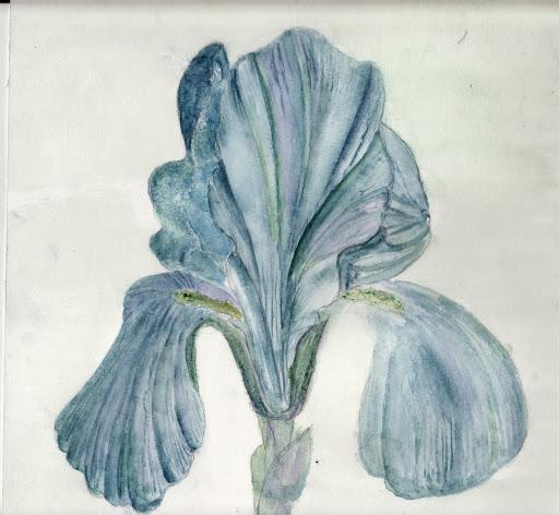 Recopiage d'oeuvre d'art ! Iris%2520troiana