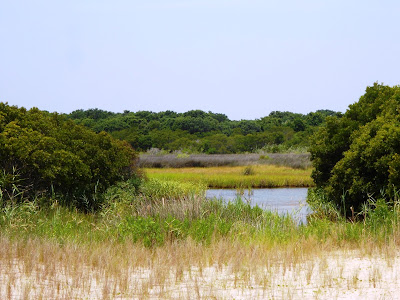 Salt Marsh along Basin Trail