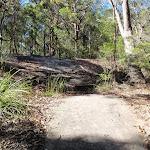 Crossing a rock platform (238508)