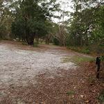 Walking through clearing (227308)
