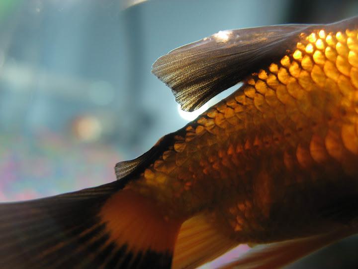 goldfish%2520018.jpg
