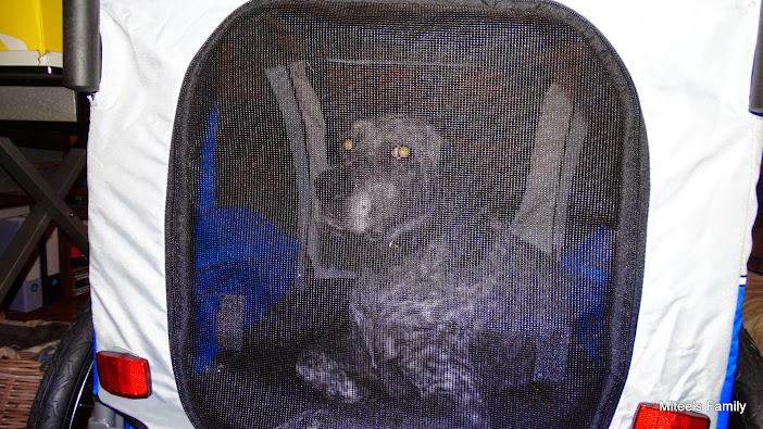 Modes de transport pour petits / vieux chiens qui fatiguent vite - Page 3 DSC02403