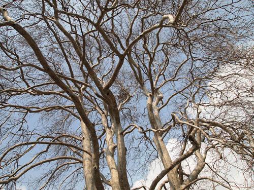 trek-shamantree1.jpg