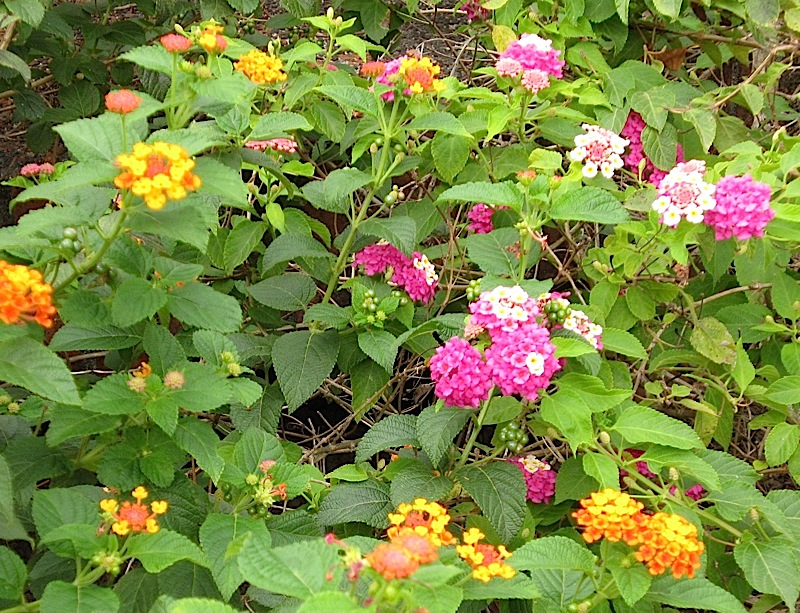 pink and orange/yellow flowers